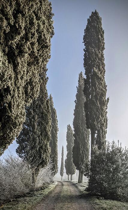 Christmas in the castello horizontal 9